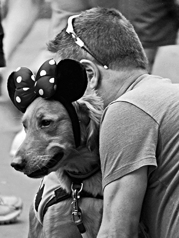 Disney dog copy