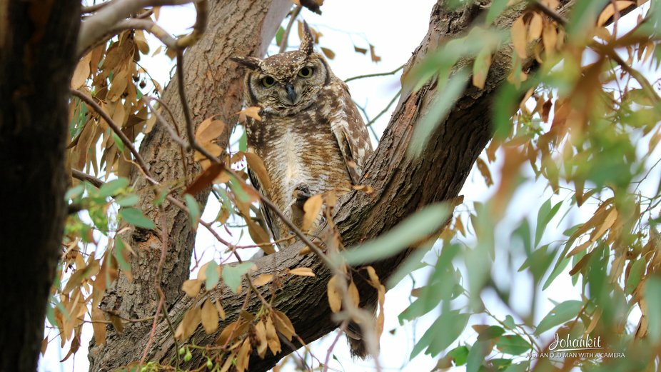 My grand daughter spotted this owl while we was driving in Marievale Bird Sancturry, South Africa...