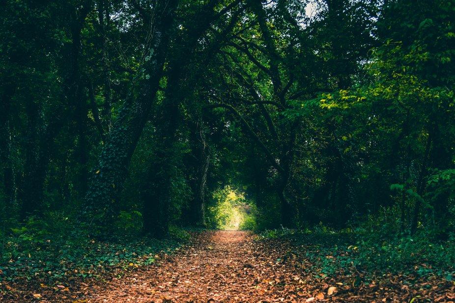 Dark wood path