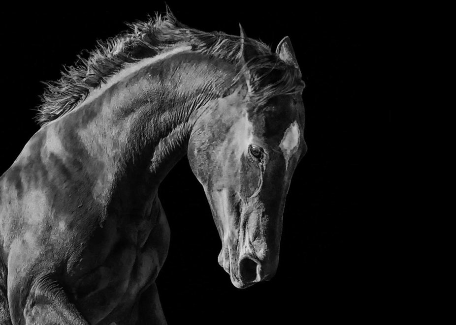 Meet Gigi, my spirited ex-racehorse. Her spirited nature and beauty make her one of my favorite s...