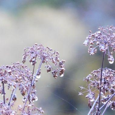 Raindrops and Webs