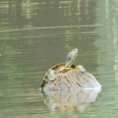 Hang on Turtle
