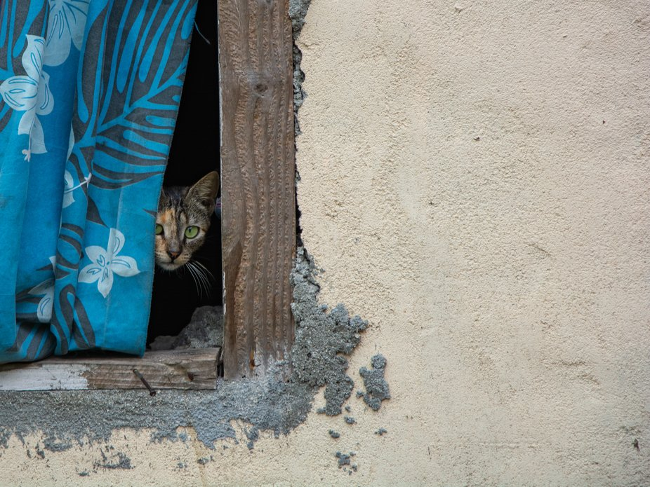 Shot this little cat while on a tour of a village on the pacific island of Mare` in Vanuatu.