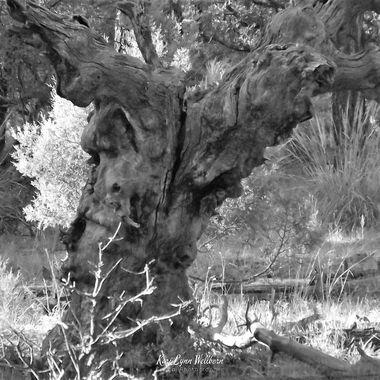 b&w tree stump
