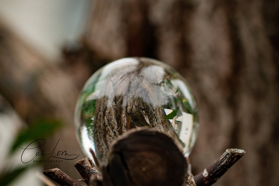 crystal ball tree view