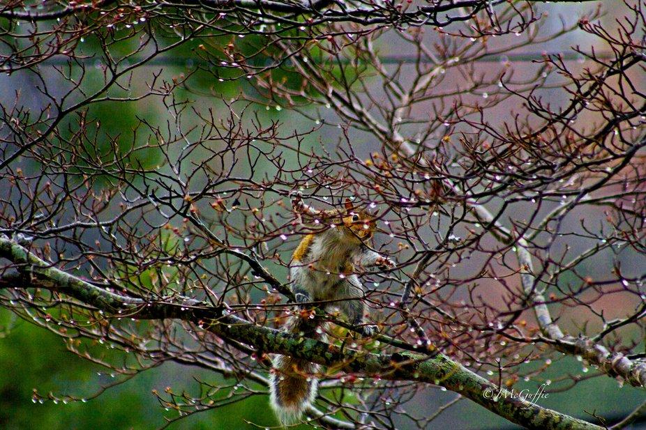 SquirrelIMG_0057