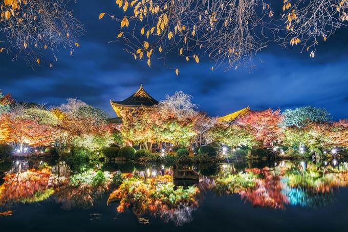 To-ji Autumn Illumination  by carmenioneanu - Bright City Lights Photo Contest