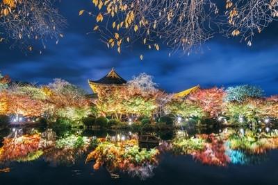 To-ji Autumn Illumination