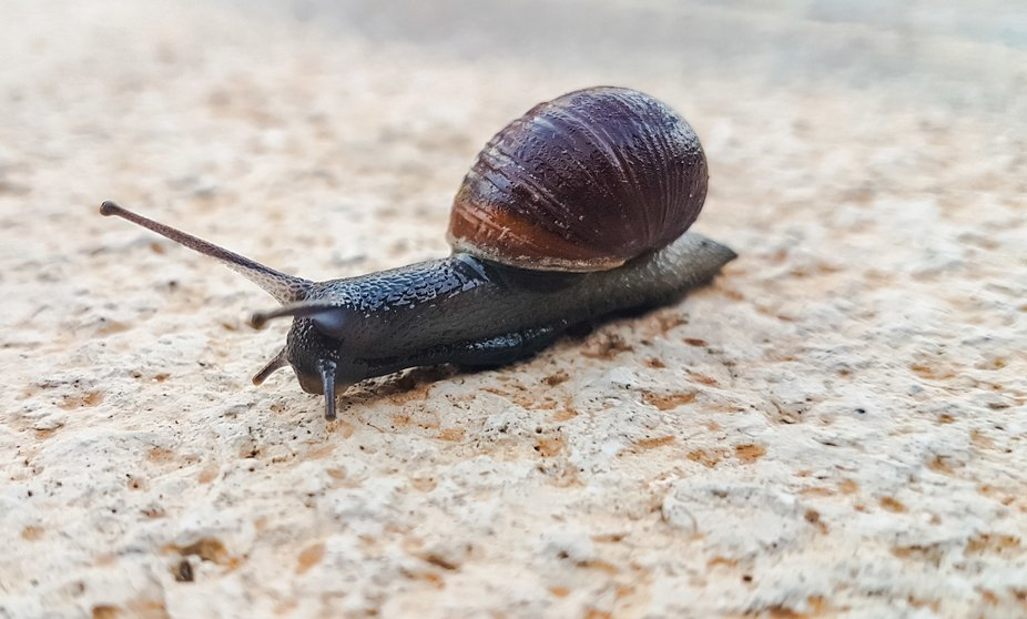 A little snail on the way...