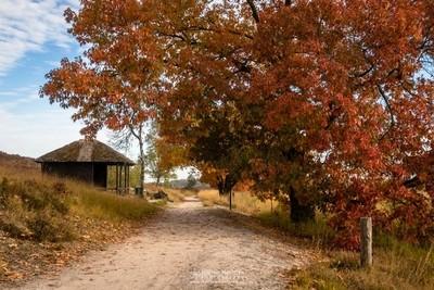 Autumn Tree Cabin Pikmeeuwenwater