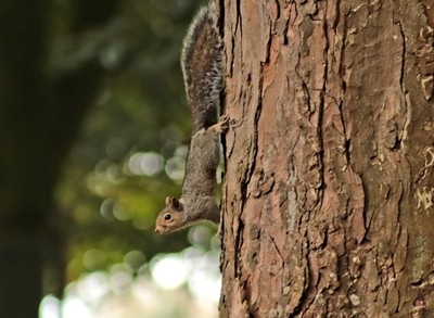 20181008_125831the squirrel poise