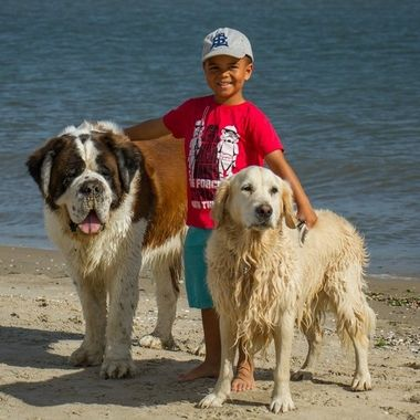My grandson with our two dogs at the beach.