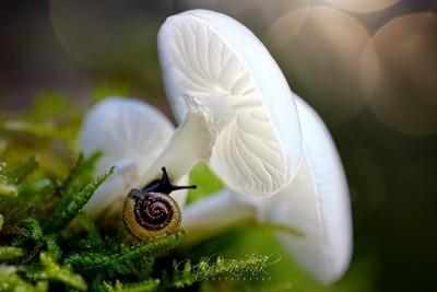 Mushrooms by Theo-Herbots-Fotograaf