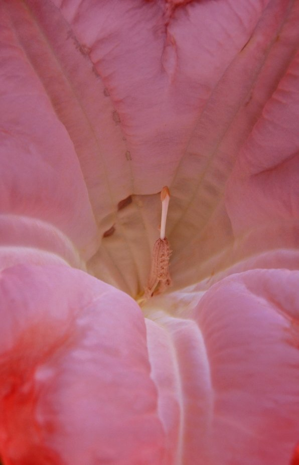 Composed with the lens inside the Angel Trumpet flower which is up to ten inches long and big enough for a lens fit. Beautiful but can be a very deadly plant.