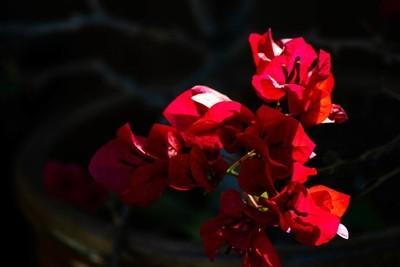 Floral-23