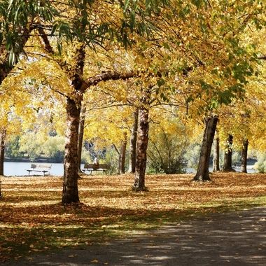 Greenlake in fall 8
