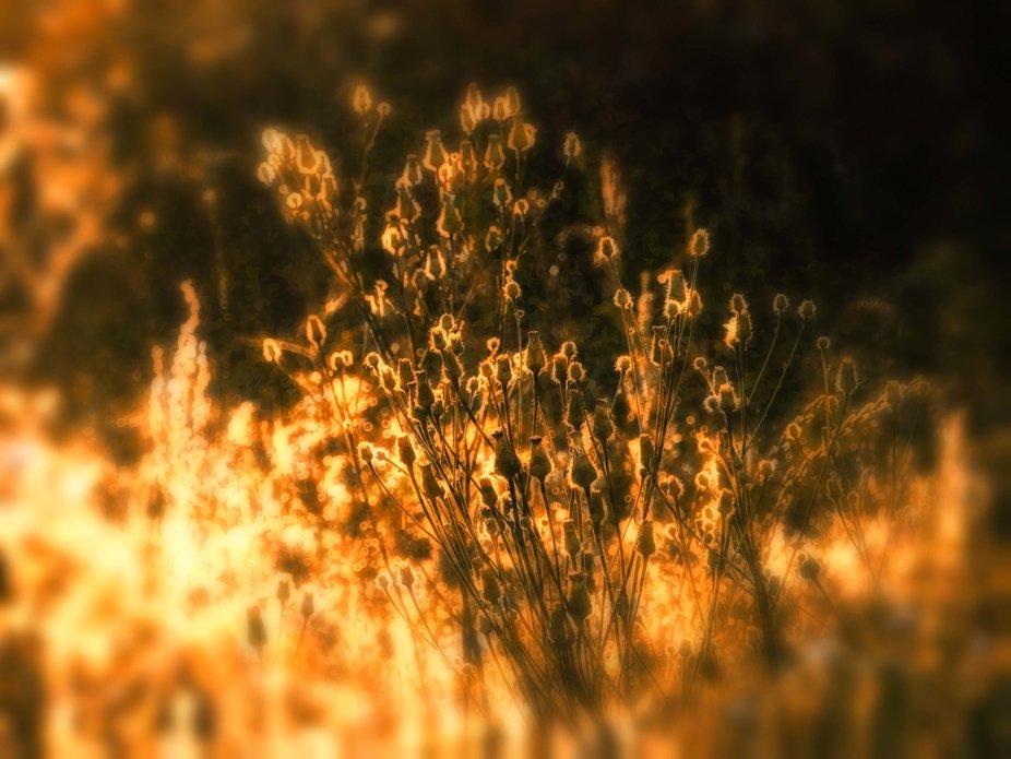 bright meadow