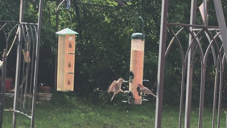 new guest coming to the feeder