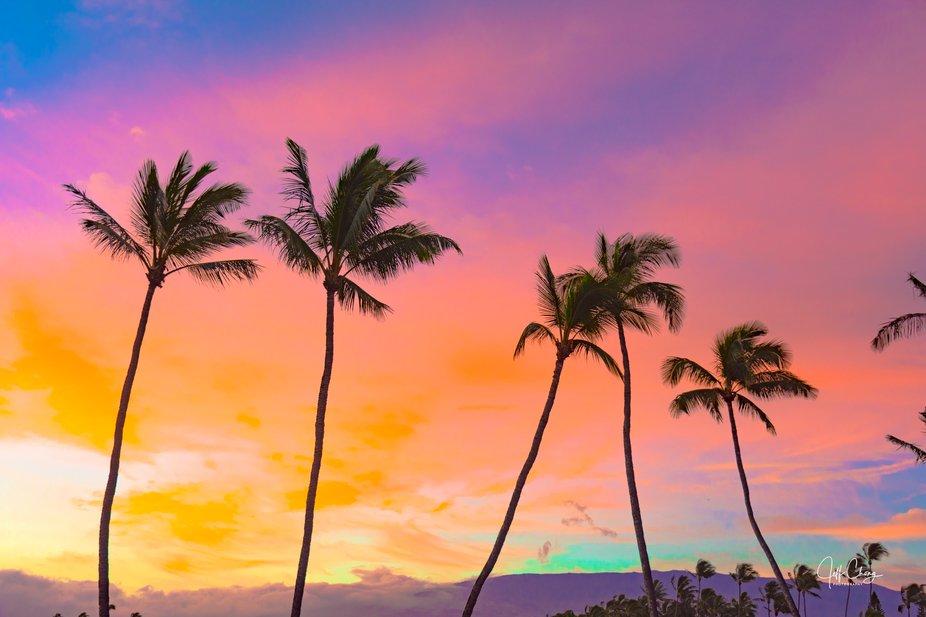colorful coconut-7647