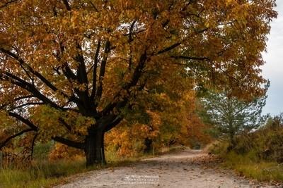 Autumn Trees De Hamert
