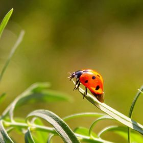 Ladybird ready to take off