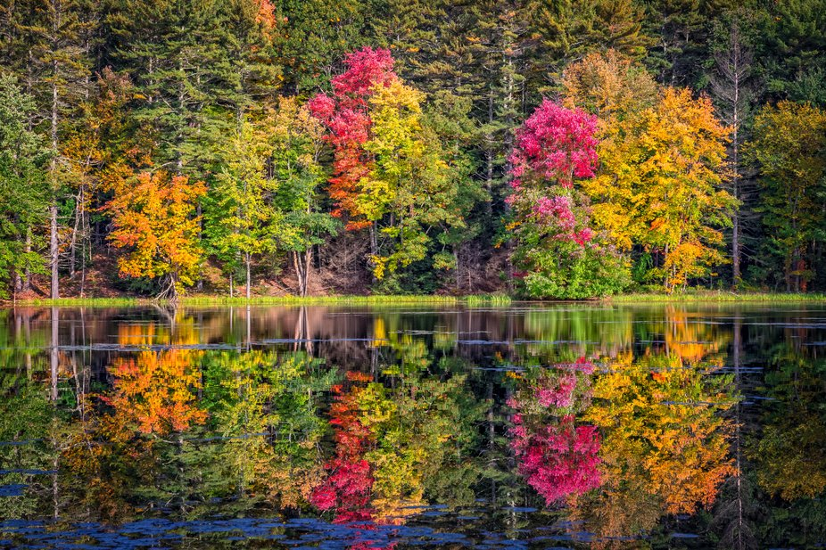 Lincoln Pond Reflection
