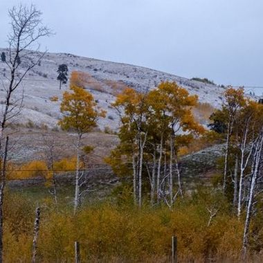 Snow came and the fall color was still prevalent