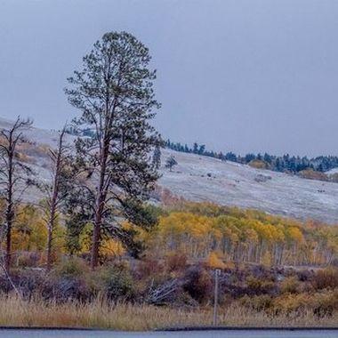 Aspen grove area