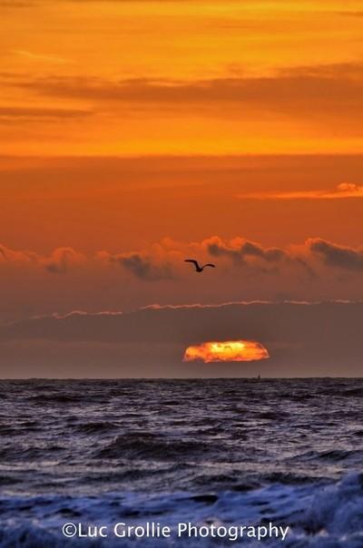 gull sunset...