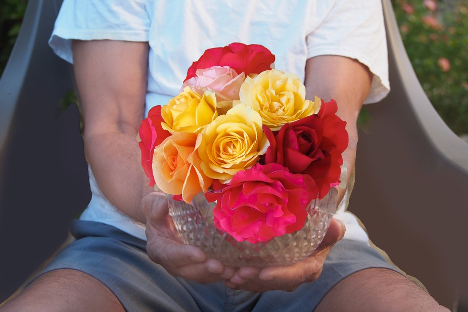 a bowl fo beautiful roses