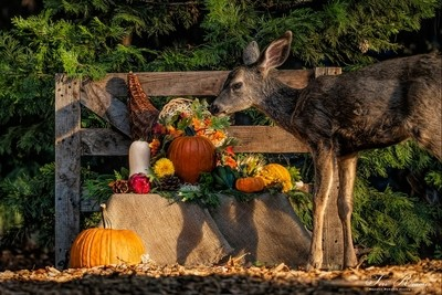 Harvest Fest And The Fawn . . .