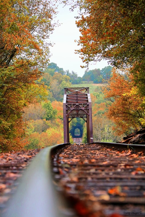 Looking for Fall by WesleyNesbitt - Social Exposure Photo Contest Vol 17