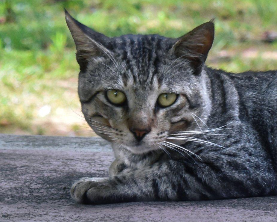 Caught a stray cat roaming in my garden....