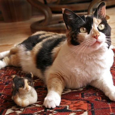 A local woman raised alpacas, and made finger puppets from the fur. I gave her a photo of our calico cat, and she created a very close replica.