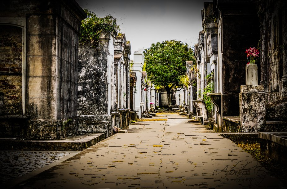 Participated in a worldwide photo shoot in New Orleans. This, the 2nd oldest cemetery, 1833, is t...