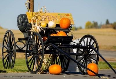 Harvest Buggy