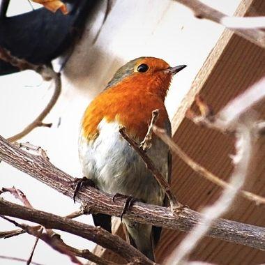 Garden Centre Robin