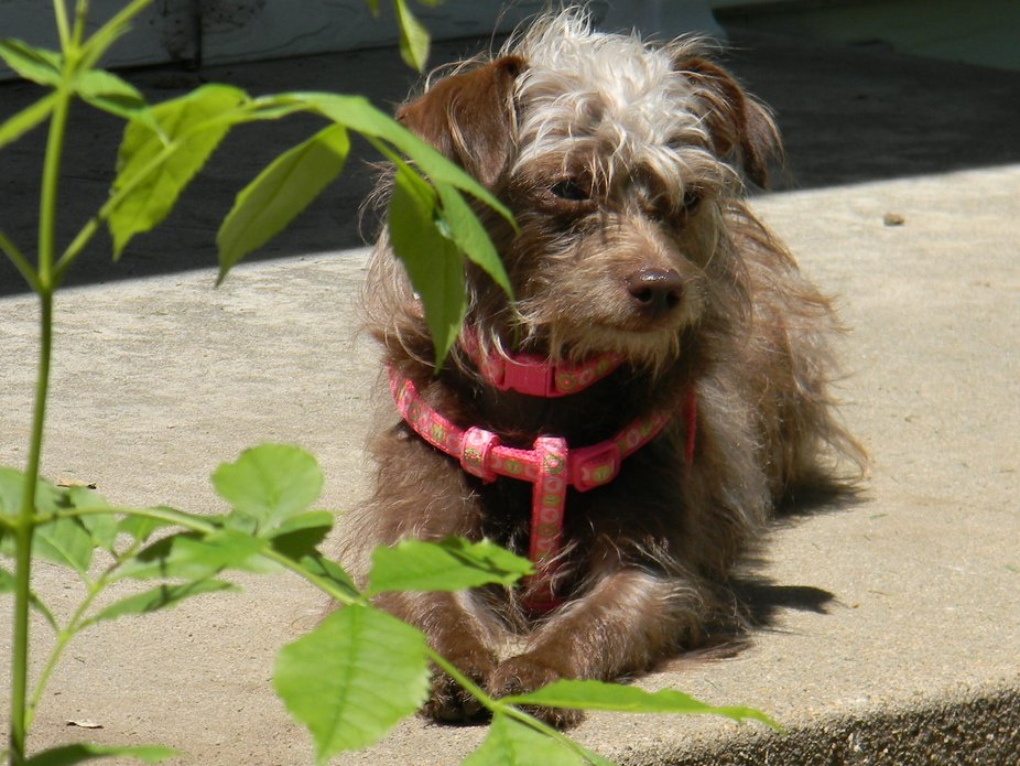 Our little Nuala (Noola) loves sunning