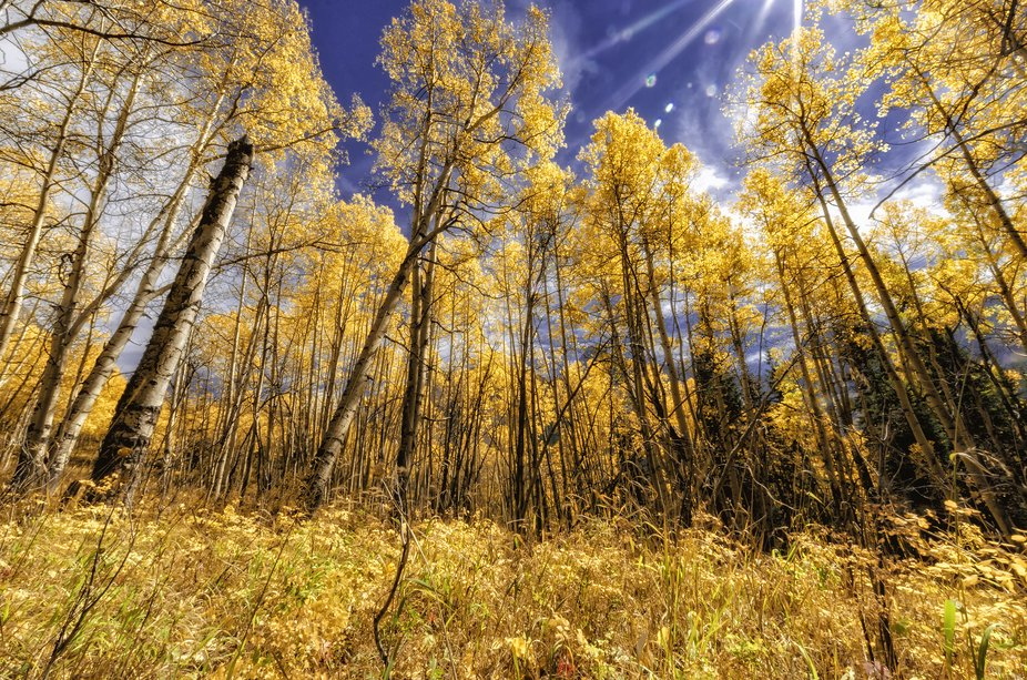 DSC_8885 Colorado Aspens