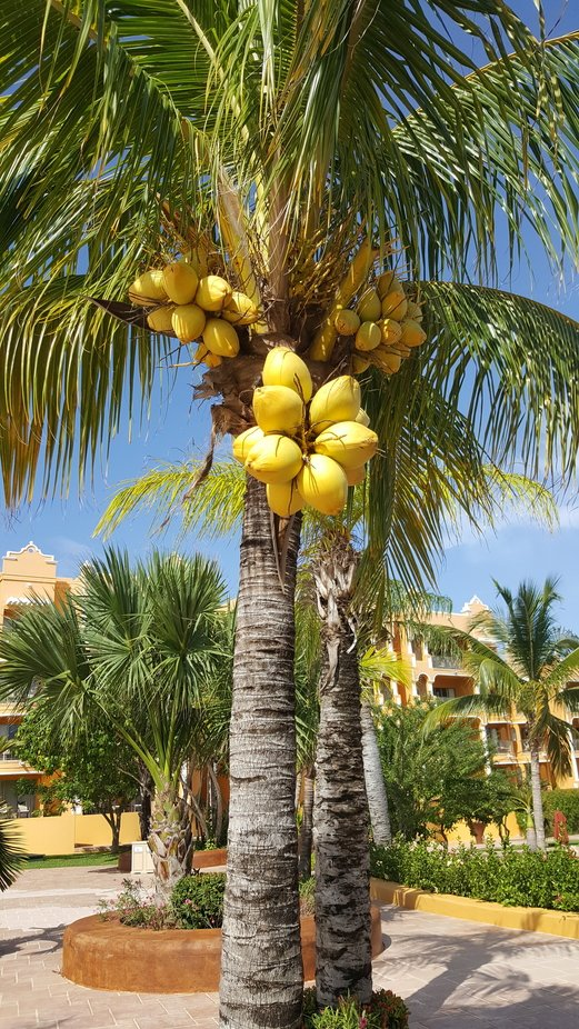 While staying at The Royal Haciendas in Playa Del Carmen, Mexico, I captured this beautiful cocon...