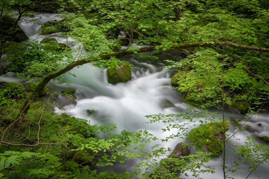 The Oirase River flows from Lake Towada down to Hachinohe in northeastern Japan. Just below Lake ...