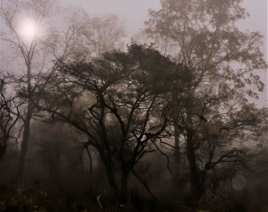 Sun Rays Thru Tree