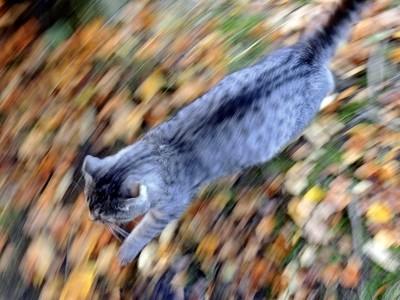 """Autumn marathon. The Series of """"As I see Autumn."""" Photo 04."""
