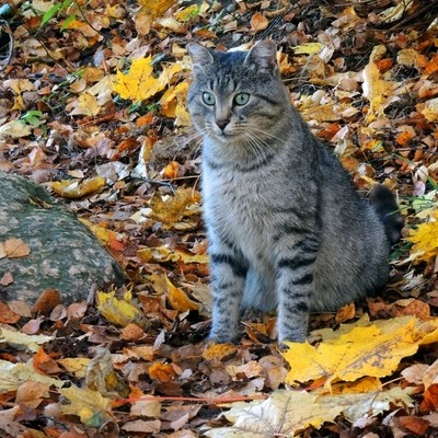 "An unexpected cat came to the river bank. The Series of "" As I see Autumn.""Photo 05."
