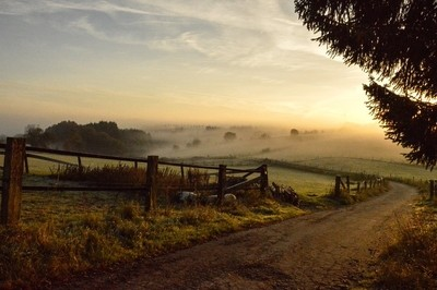 Morning fog in the countryside