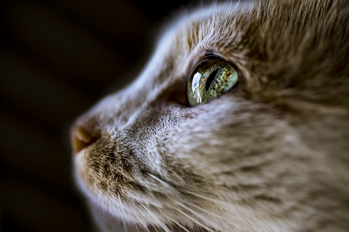 A Cat's Vision by felicityberkleef - Green Eyes Photo Contest