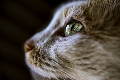 A Cat's Vision