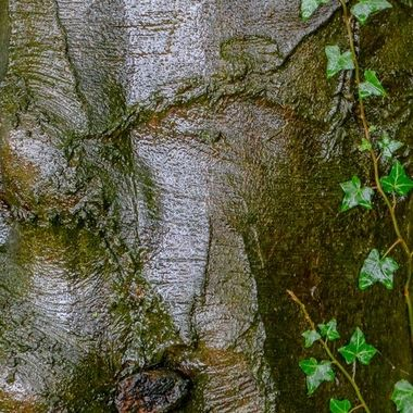 Damp Tree Trunk