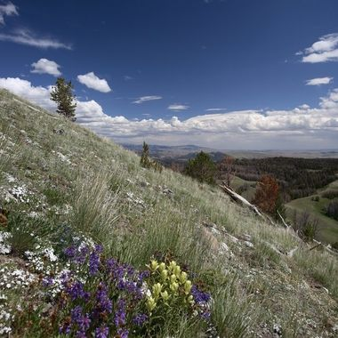 This photograph was taken on an expedition to Ramshorn Peak in northwest Wyoming.