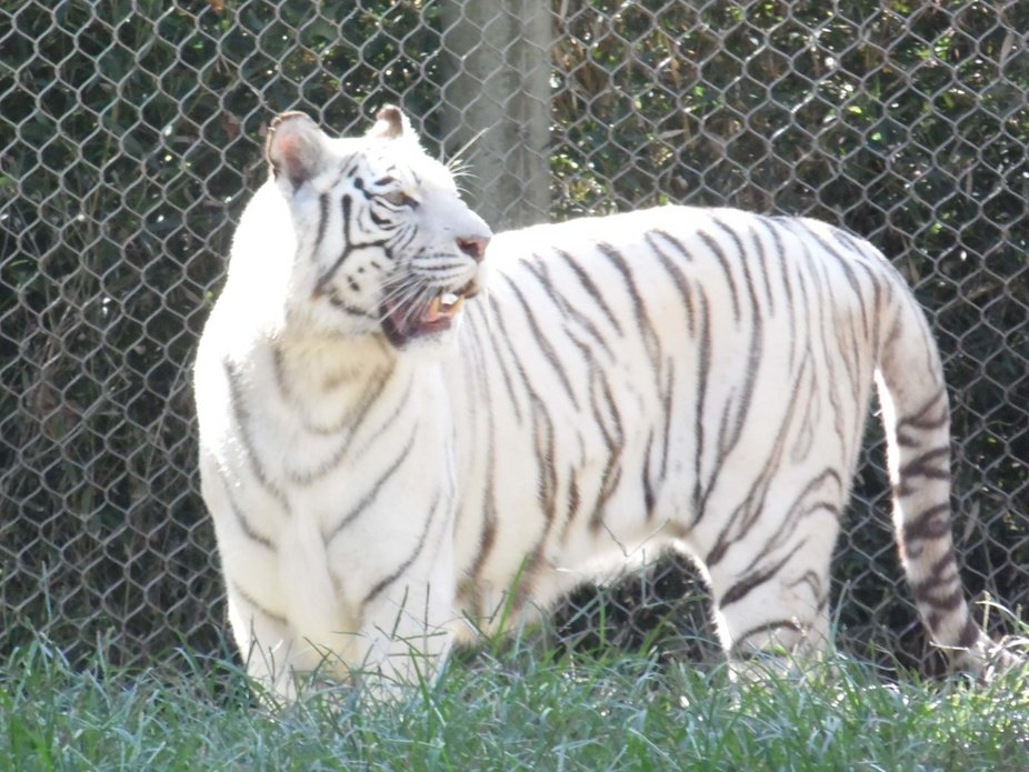 At Memphis TN zoo on outing